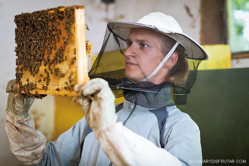 ¿Dónde se produce la mejor miel?
