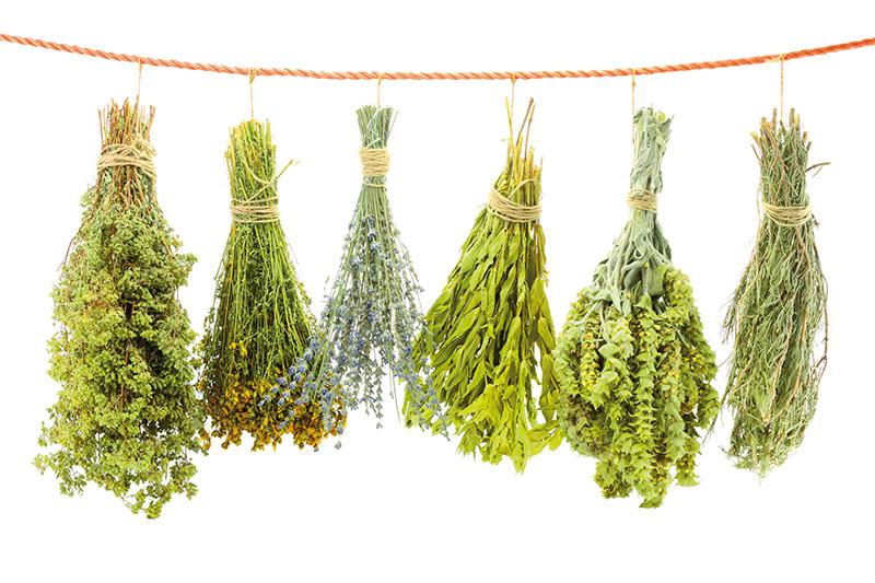 29 hierbas aromáticas. ¿Sabes para qué usar cada una?