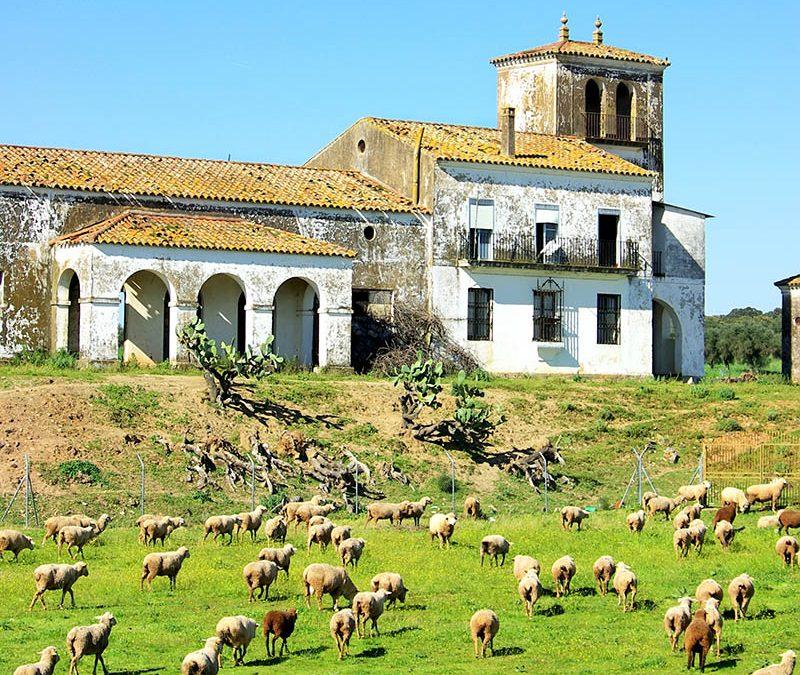 Descubre los quesos de Extremadura.